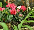 Салон «Орхидея»