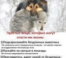 Помощь бездомным животным региона Северодонецк
