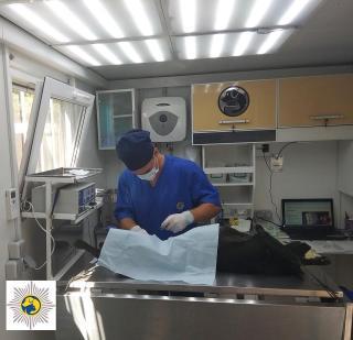 В Северодонецке пройдет плановая стерилизация и вакцинация бездомных собак