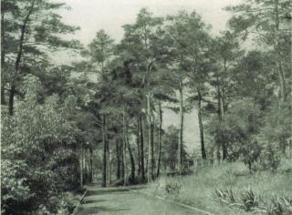 Лисхімстроївський парк