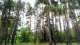Північно-Донецький лісфонд