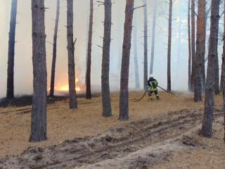 Луганщина знову палає.Оперативна інформація