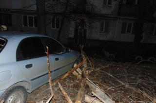 В Северодонецке на авто упало дерево
