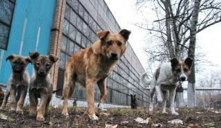 В Северодонецке будут вакцинировать бездомных животных от бешенства