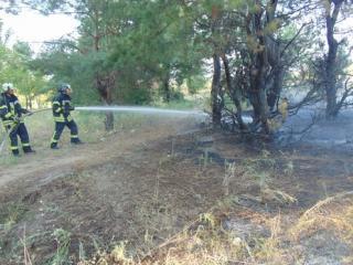 Возле Северодонецка горит лес. Его тушат более 40 пожарных