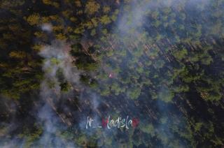 Под Северодонецком горел лес: подробности