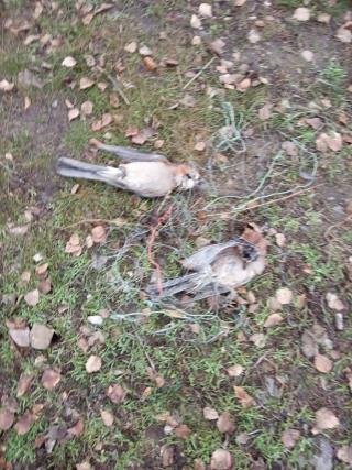 В Северодонецком лесхозе перебили хищных птиц