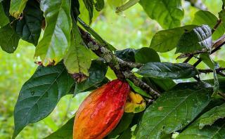 В ООН присвячують 2020 рік захисту рослин