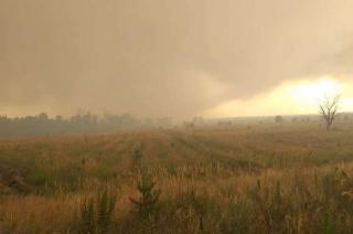 Пожар возле Северодонецка: в ГСЧС сообщили подробности