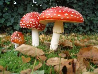 В Лисичанск мама и двое детей отравились грибами