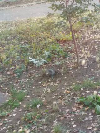 В Лисичанске возле школы упала часть ракеты «Оса»