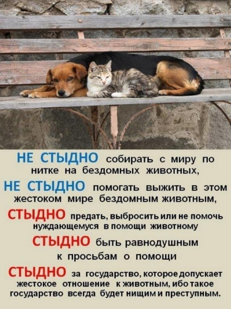 Картинка помоги бездомным животным
